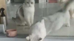 Gato em estado liquido
